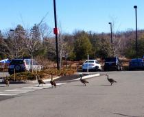 Even the geese that live at ESPN have a job -- pooping on sidewalks.