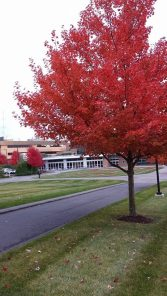 ESPN campus in the fall -- it's really purty.